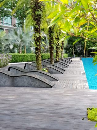 Palm Trees lined Poolside